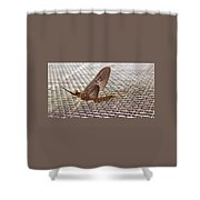 Brown Mayfly On Screening    Spring      Indiana Shower Curtain