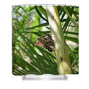 Brown Morpho Butterfly Resting On A Sunny Tree  Shower Curtain