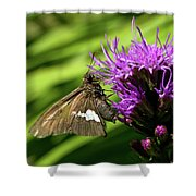 Brown Moth On Pink Shower Curtain