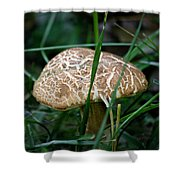 Brown Mushroom Squared Shower Curtain
