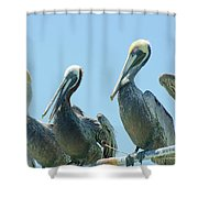 Brown Pelican 4 Shower Curtain
