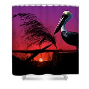 Brown Pelican At Sunset - Painted Shower Curtain