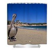 Brown Pelican At The Baja Shower Curtain