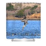 Brown Pelican Diving Shower Curtain