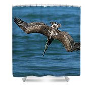 Brown Pelican Fishing Shower Curtain