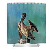 Brown Pelican - Fort Myers Beach Shower Curtain