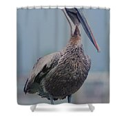 Brown Pelican On The Dais Shower Curtain