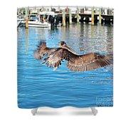 Brown Pelican Taking Flight Shower Curtain