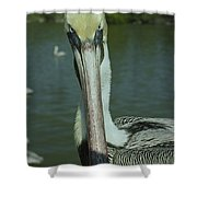 Brown Pelican Up Close Shower Curtain