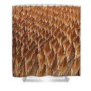 Brown Pelican Wings Shower Curtain