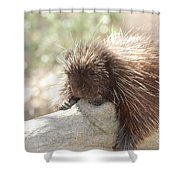 Brown Porcupine On A Fallen Log Shower Curtain