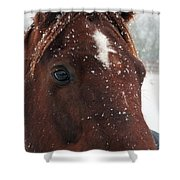 Brown Snow Horse Shower Curtain