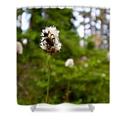 Brown Spruce Longhorn Beetle Shower Curtain