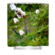 Brown Spruce Longhorn Beetle Two Shower Curtain