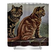 Brown Tabby And Orange Tabby Shower Curtain
