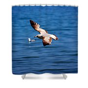 Brown Tips Shower Curtain