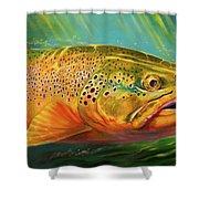 Brown Trout Portrait  Shower Curtain