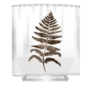 Fern Leaf Botanical Poster, Brown Wall Decor Modern Home Art Print, Abstract Watercolor Painting Shower Curtain