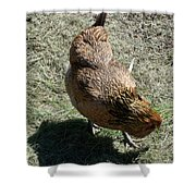 Brownie The Hen Shower Curtain