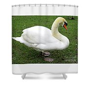 Bruges Swan 1 Shower Curtain
