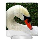 Bruges Swan 2 Shower Curtain