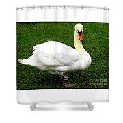 Bruges Swan 3 Shower Curtain