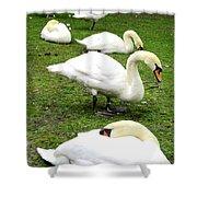 Bruges Swans 2 Shower Curtain