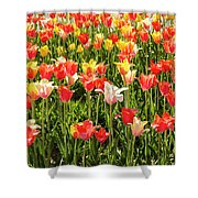 Brushed Tulips Shower Curtain