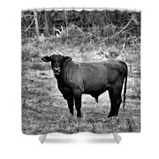 Brutus2 Shower Curtain