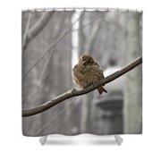 Bryant Park Bird Nyc Shower Curtain
