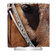 Bryce Canyon Horse Portrait Shower Curtain
