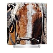 Bryce Canyon Horseback Ride Shower Curtain