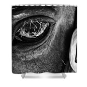 Bryce Canyon National Park Horse Bw Shower Curtain