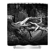 Bryce Canyon Tree Stump On A Ridge Shower Curtain