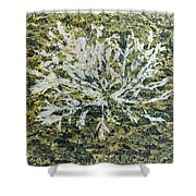 Bryozoan Life Shower Curtain