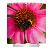 Bumble On A Pistil Shower Curtain