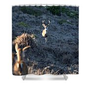 Buck And Does Shower Curtain