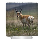Buck Antelope  Shower Curtain