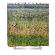Buck In Field Shower Curtain