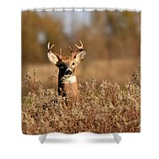 Buck In The Weeds Shower Curtain