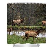 Buck In Wilderness Shower Curtain