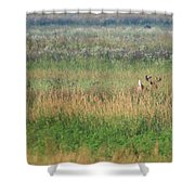 Buck Running In Field Shower Curtain