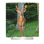 Buck Standing Tall Shower Curtain