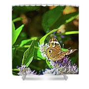 Buckeye Butterfly On The Move 1 Shower Curtain