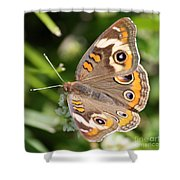 Buckeye Butterfly Square Shower Curtain