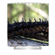Buckeye Caterpillar Shower Curtain