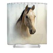 Buckskin Beauty Shower Curtain