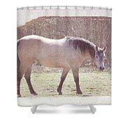Buckskin Horse  Shower Curtain