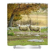 Bucolic Sheep In Mystic  Shower Curtain