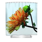Bud And Blossom Shower Curtain